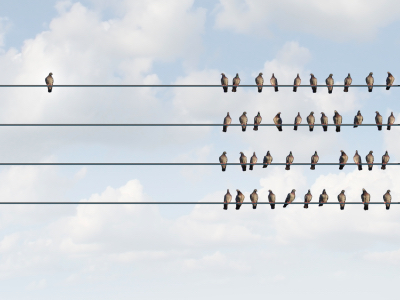 a group of pigeon birds on a wire with one individual in the opposite direction, discrimination
